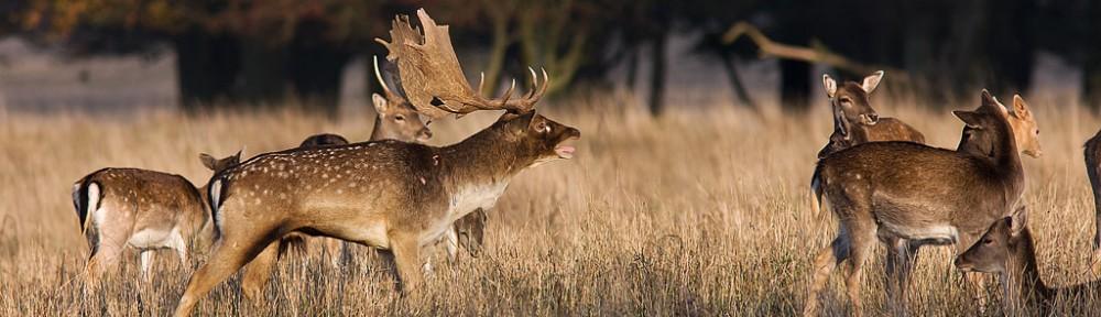 Fejø Jagtforening
